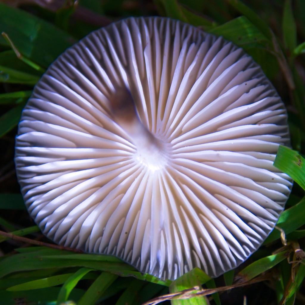 Upside down fungi  by fr1da
