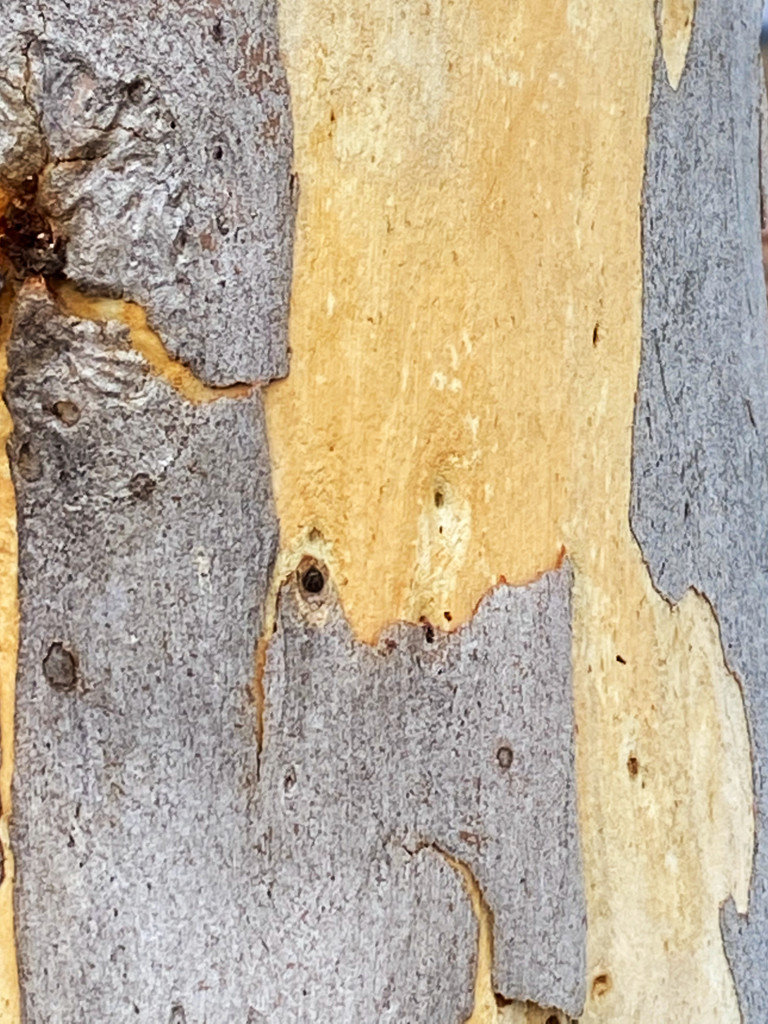 Bark Textures by fr1da