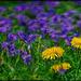Spring Weeds