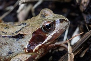 6th May 2021 - FROG PORTRAIT