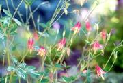 11th May 2021 - Spring Blooms