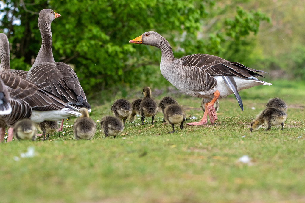 Family group by stevejacob