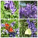 Busy at the bluebells!