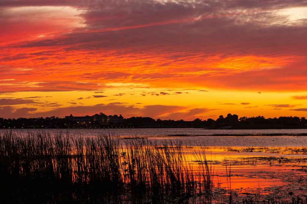 Sunset Oranges by photograndma