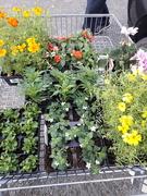 11th May 2021 - Easy gardening