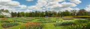 11th May 2021 - A panorama from the park.