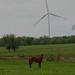 Horse and Wind Turbine