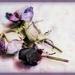 Vintage Roses 2
