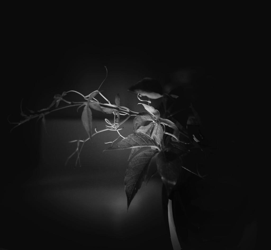 Darkness  by joemuli