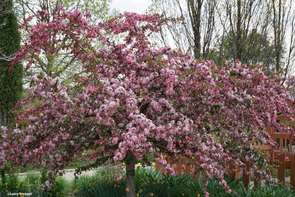 Tree in bloom by larrysphotos