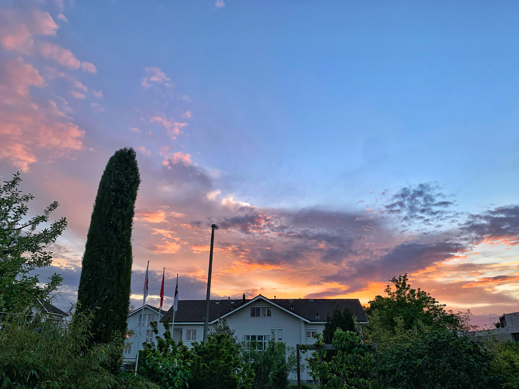 Pink sunset in my garden.  by cocobella