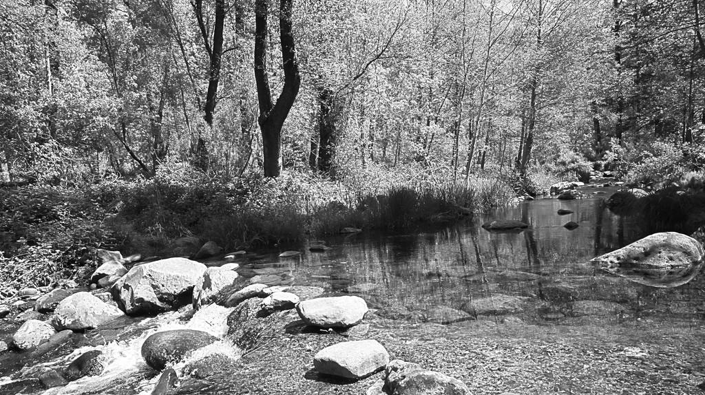 Up Oak Creek by joysabin