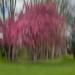 Cherry Blossom Blur