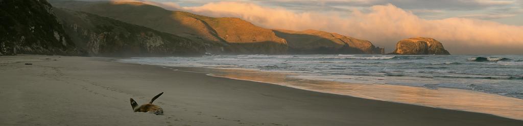 Last Light at Allan's Beach by helenw2