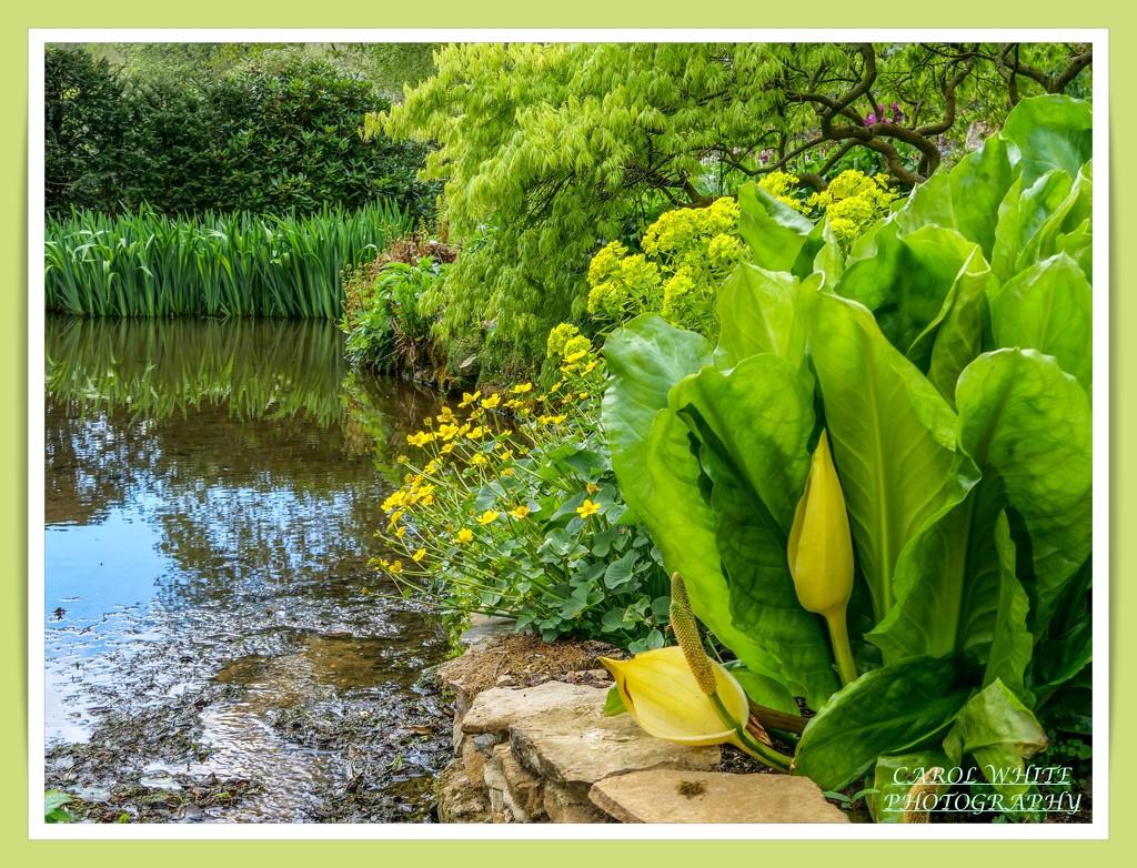 Beside The Pond by carolmw