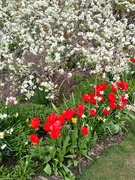 12th May 2021 - A flower border at Edwards Garden, Toronto