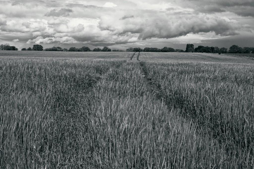 FIELD TRACK by markp