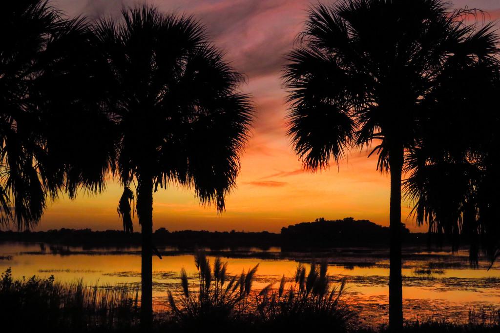 Florida at Sunset by photograndma