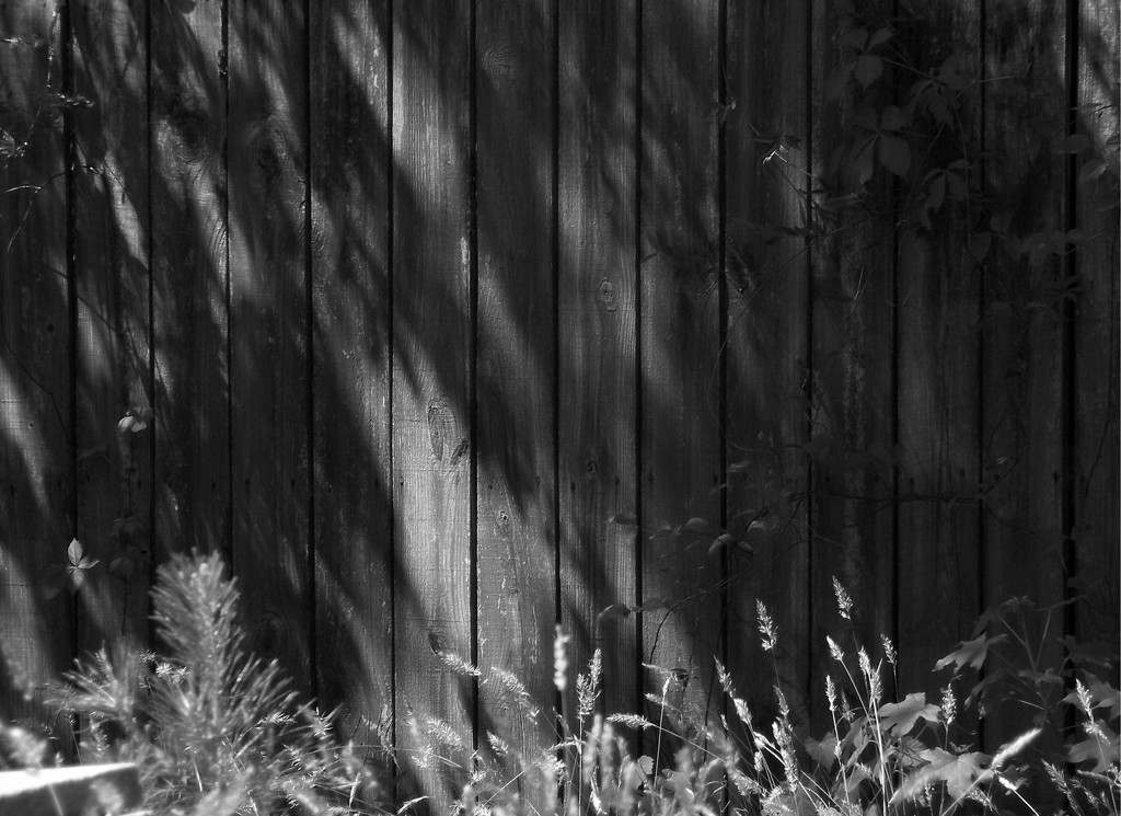 Late afternoon shadows... by marlboromaam