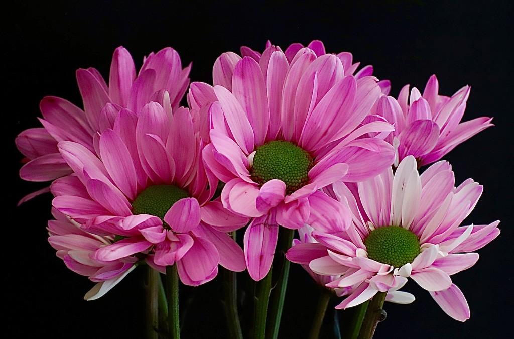 Nurses Day Flowers by carole_sandford