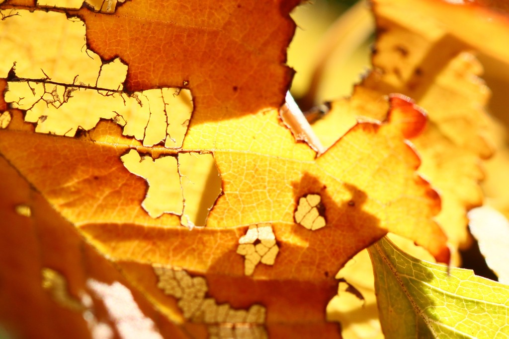the autumn leaf by wenbow