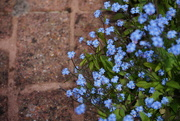 13th May 2021 - blue and terracotta