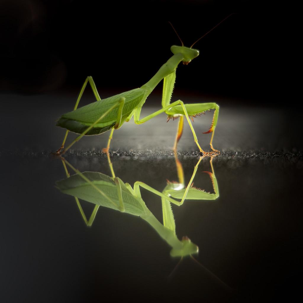 Another alien creature by suez1e