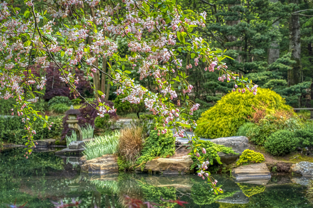 Japanese Gardens by kvphoto