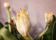 14th May 2021 - White Paintbrush flower
