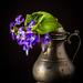 more posing violets