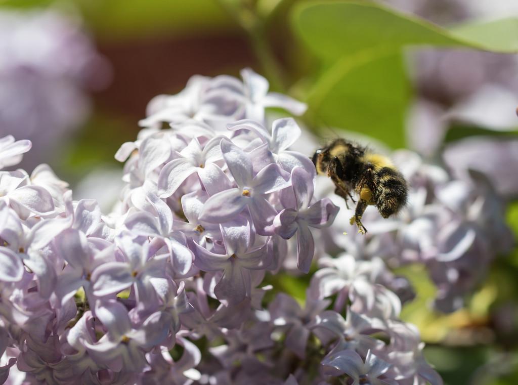 Losing her pollen..... by jankoos