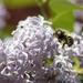 Losing her pollen.....