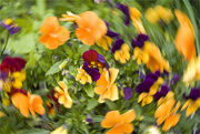 14th May 2021 - ICM Flowers