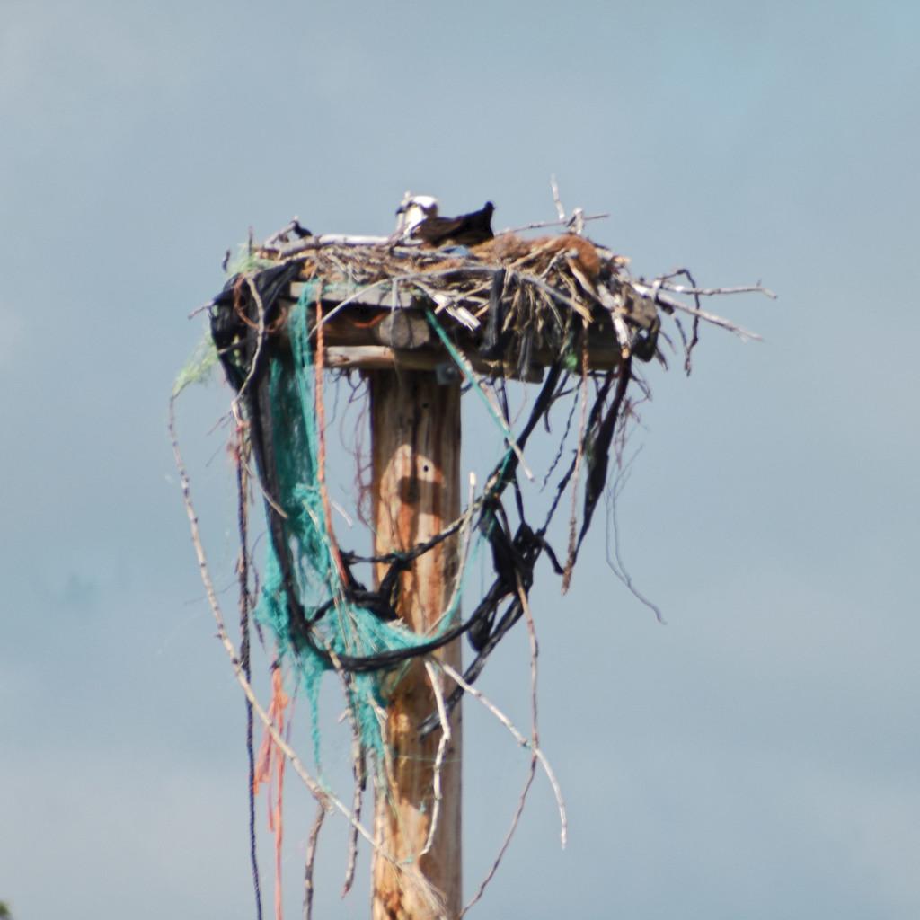 Osprey Nest by bjywamer