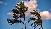 14th May 2021 - Trees in the Breeze!