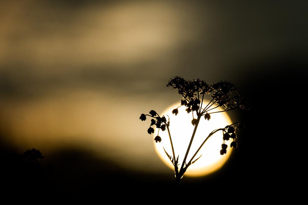 Sun and Flower  by katarzynamorawiec