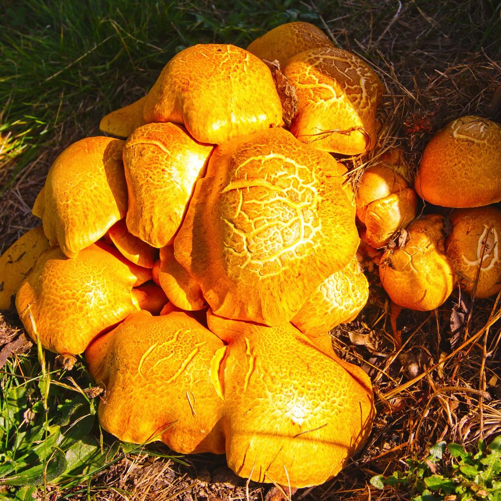 Many Fungi  by fr1da
