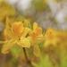 2021-05-15 yellow