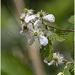 flower tree_6182