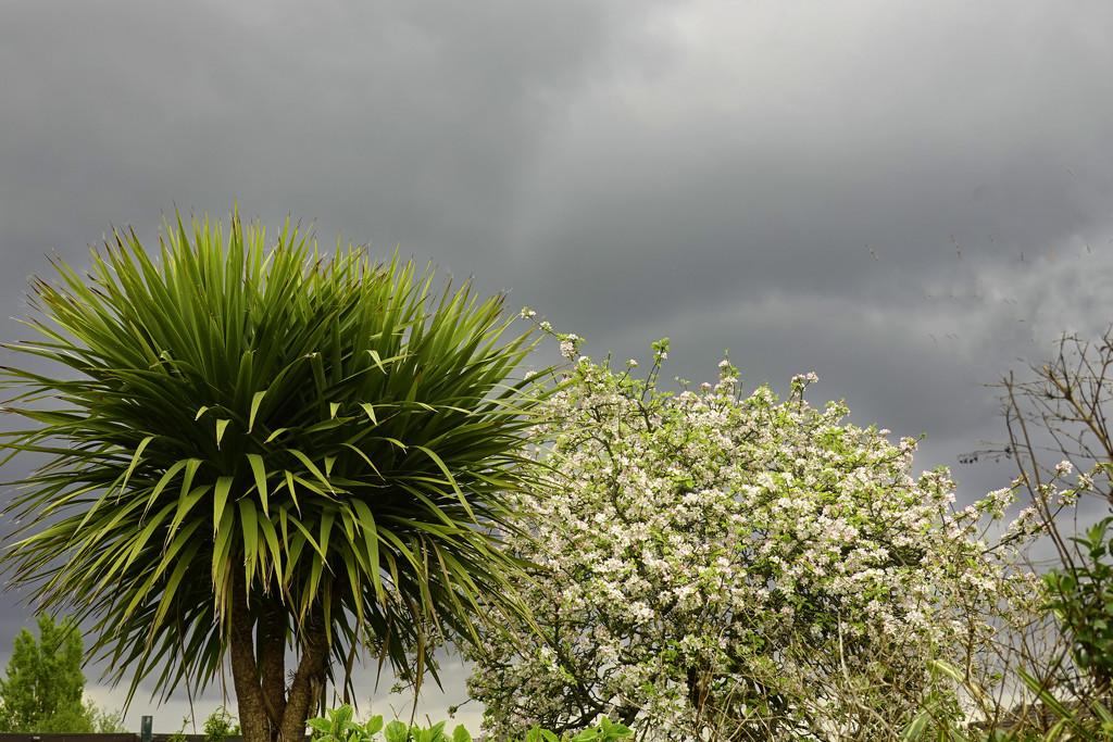 Looks Like Rain. by tonygig