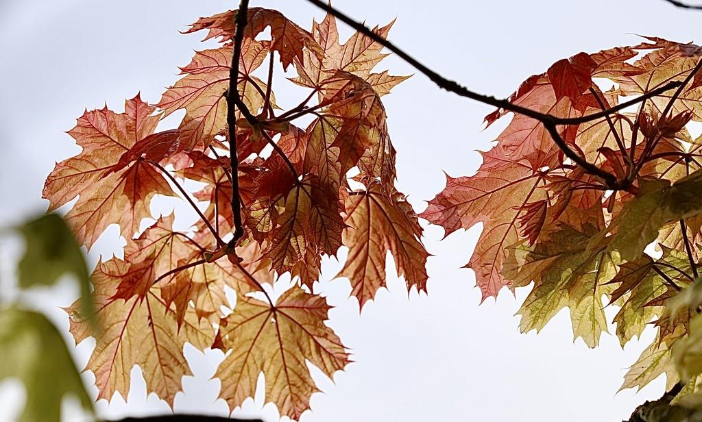 Autumn Colours....2 by carole_sandford