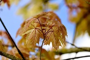 16th May 2021 - Autumn colours