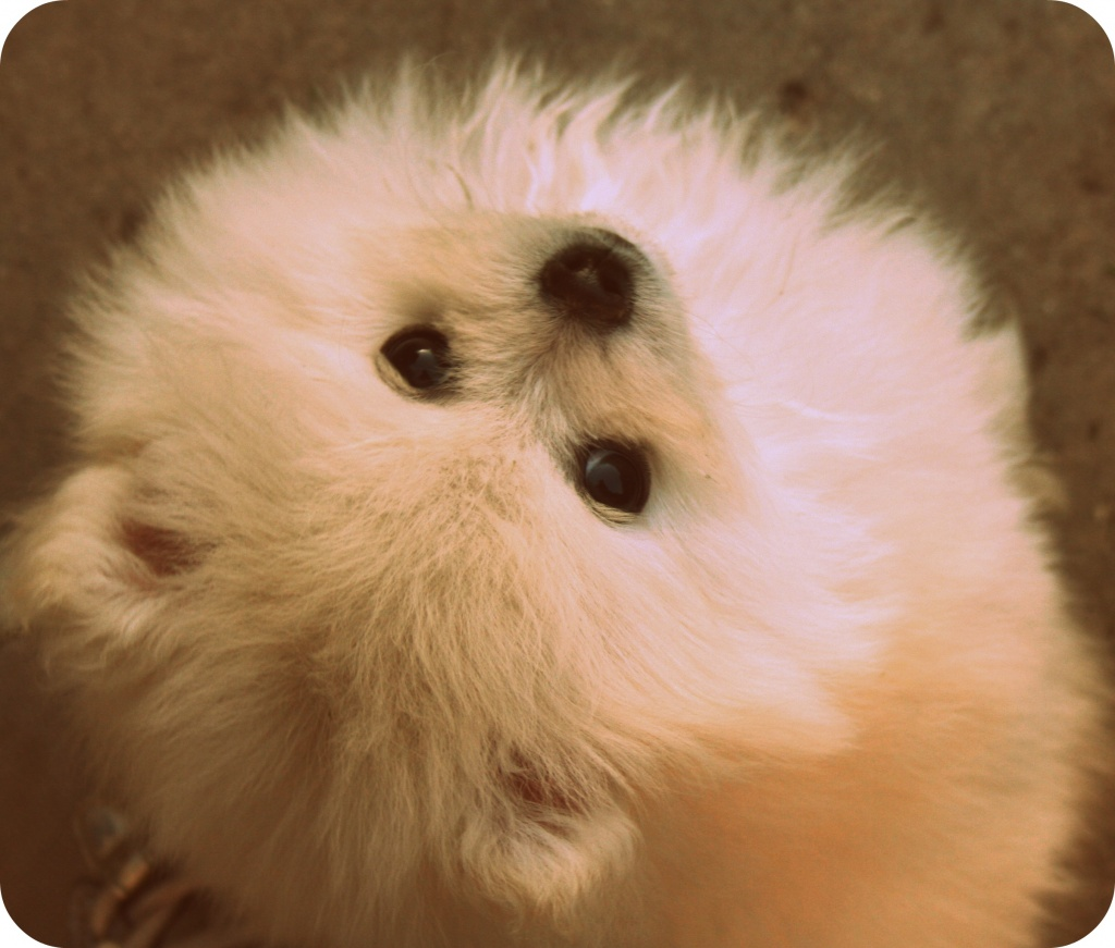 The Trouble With Tribbles by kerristephens