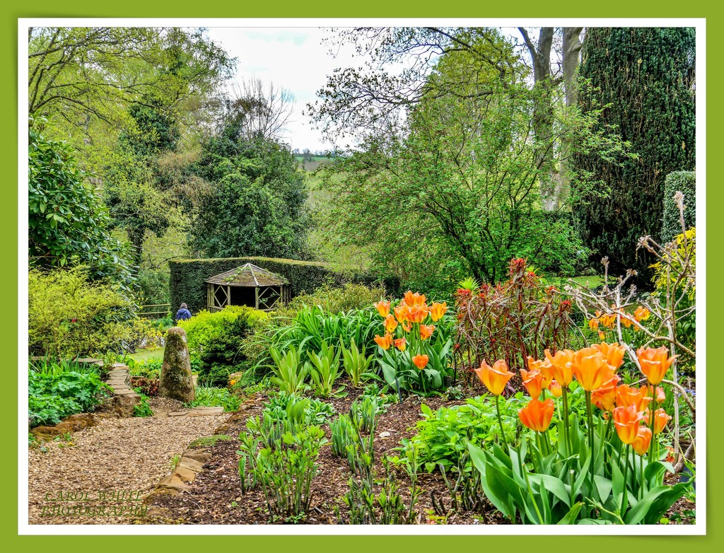 Garden View by carolmw