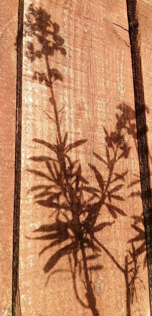 Shadows by dragey74