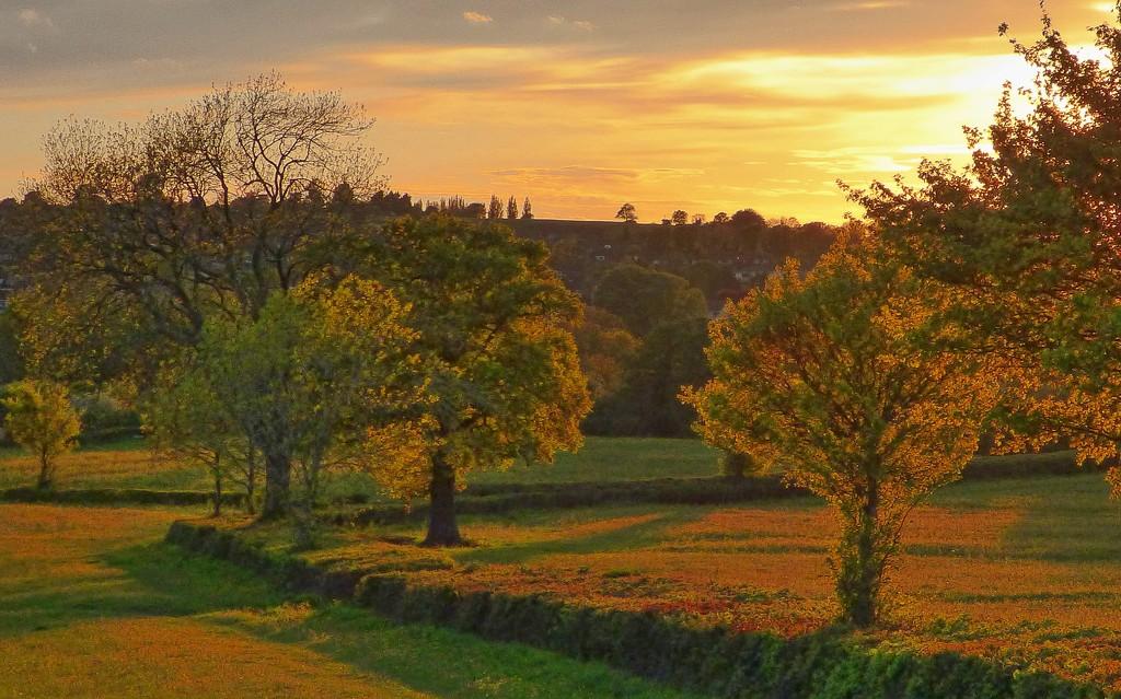 Evening sun by jaffacake