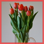 18th May 2021 - red tulips in a glass vase