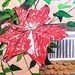 Clematis (painting)