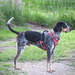 Trapper On Sentry Duty