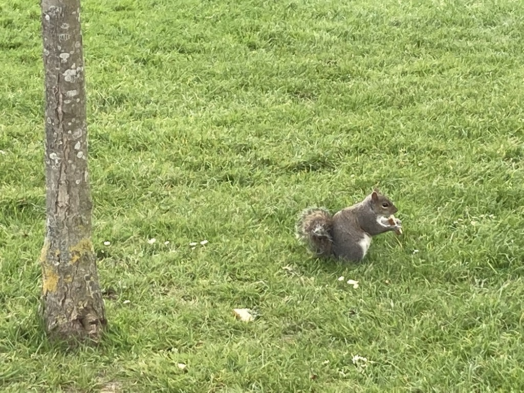 Squirrel Eating Some Leftover Sandwich  by cataylor41